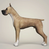 08 19 38 470 realistic great dane dog 03 4