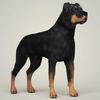 08 19 43 479 realistic rottweiler dog 06 4