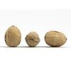 22 18 16 831 threewalnuts01 002 cover2 4