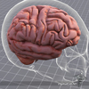 07 25 32 988 dl3d braindetailed1 4