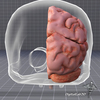 07 25 44 509 dl3d braindetailed4 4