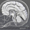 07 25 44 781 dl3d braindetailedgrayscale 4