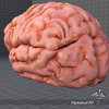 07 53 39 132 dl3d brainexternal3 4