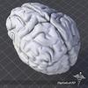 07 53 51 23 dl3d brainexternalgrayscale 4
