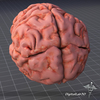 07 53 56 416 dl3d brainexternal1 4