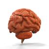 08 18 34 172 brain anatomy 3 4