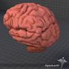 08 18 35 866 dl3d brain2parts1 4