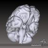 09 21 03 376 dl3d brain2partsgrayscale 4