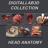 09 22 14 120 head anatomy collection 4