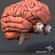 Eye and Brain 3D Model