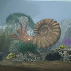 Ammonite with complete underwater scene 3D Model