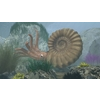 14 19 21 733 ammonite01 4