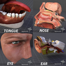 Human Four Senses Collection 3D Model