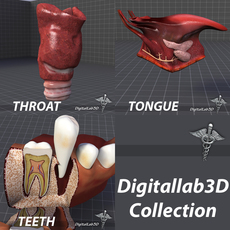 Tongue, Throat, and Teeth Collection 3D Model
