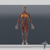 08 15 49 843 dl3d fmusculars wireframe 4