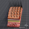 00 06 28 81 dl3d scalp 5 4