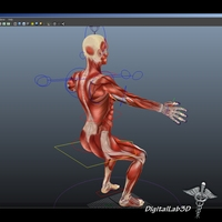 Rigged - Human Female Muscular System 3D Model