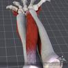 03 54 51 173 forearm 4 4