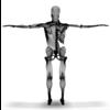 04 19 54 305 musclebonestruc wireframe2 4