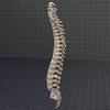 05 28 41 141 spine2 4
