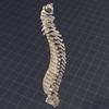 05 28 44 482 spine3 4