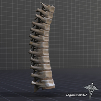 Human Thoracic Vertebrae 3D Model