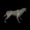 20 46 22 944 wolfblackpic1 4