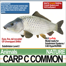 Carp C Common 3D Model