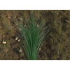03 03 46 948 grass preview 4