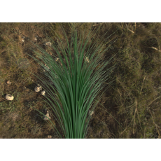 Grass Map Pack with 256 - 4096 Resolution Texture Options!