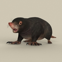 Game Ready Mole 3D Model