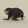 06 39 02 404 game ready mole 01 4
