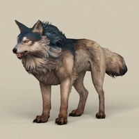 Game Ready Wild Wolf 3D Model