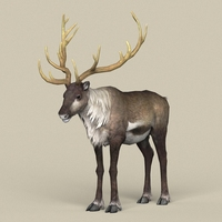 Game Ready Reindeer 3D Model
