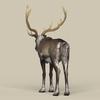 12 34 09 327 game ready reindeer 04 4
