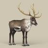 12 34 09 345 game ready reindeer 06 4