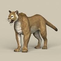 Game Ready Puma 3D Model