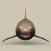 05 51 19 181 game ready shark 02 4