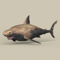 Game Ready Shark 3D Model