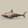 05 51 19 246 game ready shark 03 4