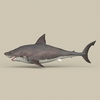 05 54 00 209 game ready white shark 03 4
