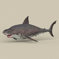 Game Ready White Shark 3D Model