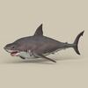05 54 00 322 game ready white shark 01 4