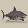 05 54 01 758 game ready white shark 06 4