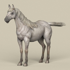 Game Ready White Horse 3D Model