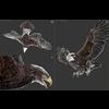 08 58 36 77 eagle golden 20 3dsmax wireframe 4