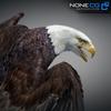 09 00 50 759 eagle bald 02 4