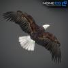 09 00 51 18 eagle bald 05 4