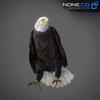 09 00 54 169 eagle bald 08 4