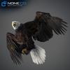 09 00 54 176 eagle bald 06 4